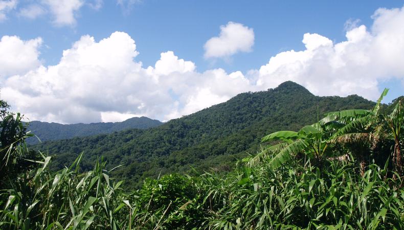Antalis stellt Initiative zum Kohlenstoffausgleich vor