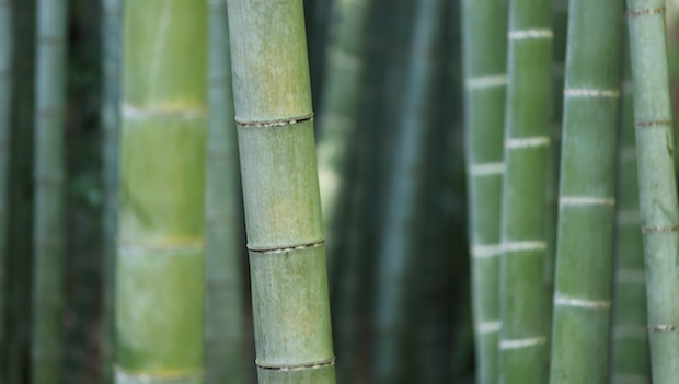 Ignorance and bamboo