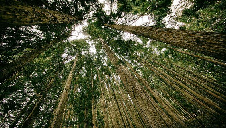 Epson will im Printbereich in puncto Nachhaltigkeit vorangehen