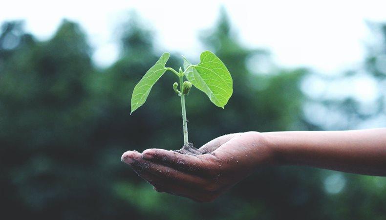 Wie man Greenwashing erkennt