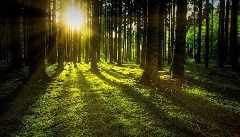 Lexmark makes green commitment with carbon neutral pledge