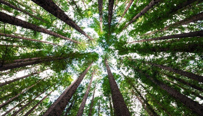 Wir müssen über Nachhaltigkeit reden
