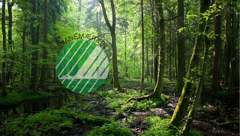 Nordic Swan: ¿la certificación ecológica más alta?